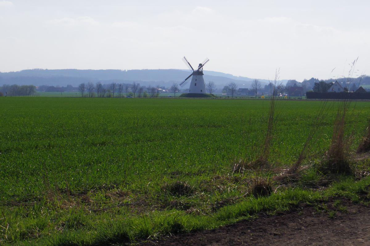 Windmühle in Veltheim